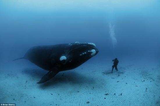 POLITICANDO Os Gigantes Do Mar Em Fotos Incriveis