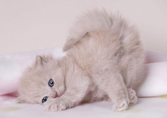 Gatos e gatinhos- tudo sobre gatos. Fotos do seu gato.